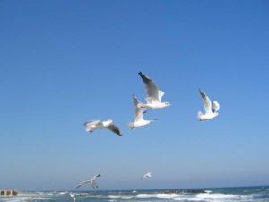 Noclegi z widokiem na morze
