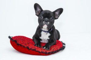 Komfortowy materac dla psiaka