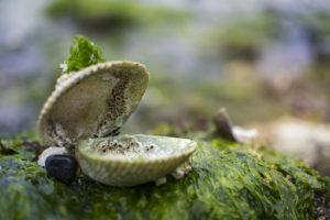 Zalety alg słodkowodnych