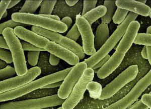 Zasadność badań na obecność pasożytów