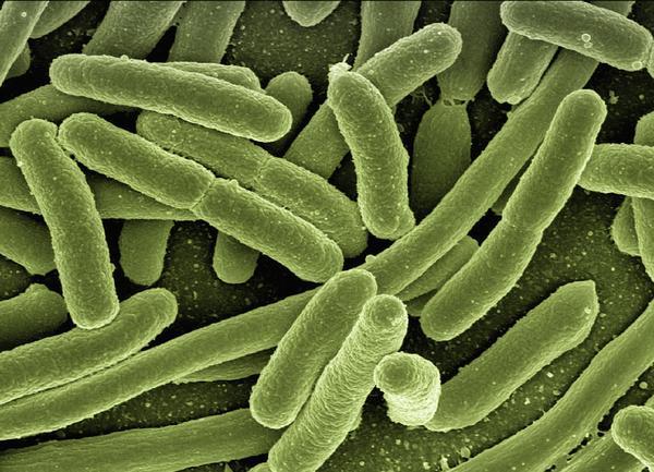 badanie na obecność pasożytów