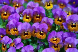 Stymulator wzrostu roślin może być bardzo skuteczny