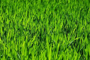 Szybkie zakładanie trawników we Wrocławiu