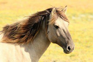 Zdrowa sieczka dla konia